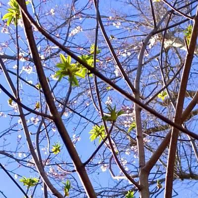 Spring Leaves #seasons #trees Poster