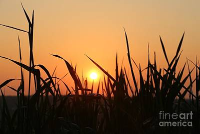 Spring Meadow Sunrise Poster by Neal Eslinger