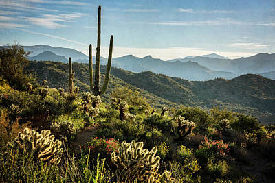 Poster featuring the photograph Spring Morning In The Sonoran  by Saija Lehtonen