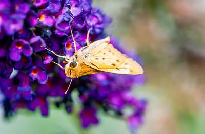 Spring Moth Poster