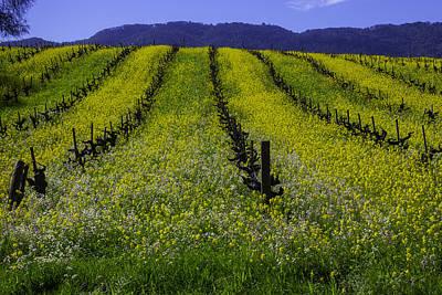 Spring Mustard Field Poster by Garry Gay