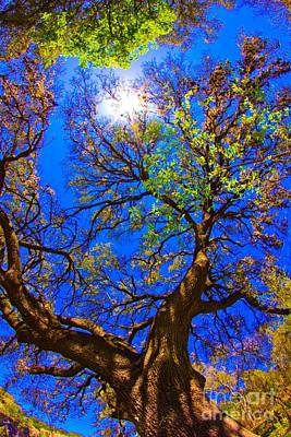 Spring Oak Poster