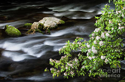 Poster featuring the photograph Spring On The Oconaluftee River - D009923 by Daniel Dempster