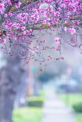 Spring On Vine Street Poster by Terry Davis