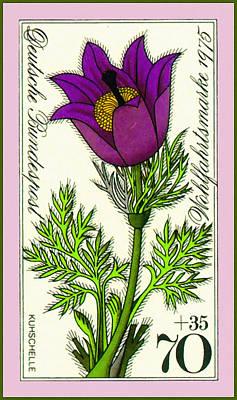 Spring Pasque Flower Poster