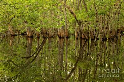 Spring Reflections At Manatee Springs Poster