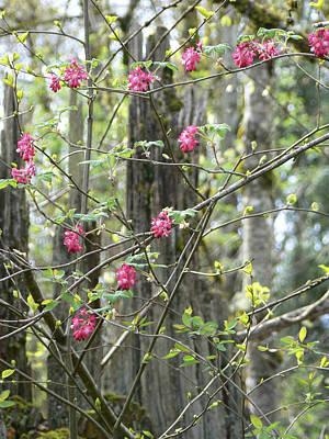 Spring Renewal  Poster