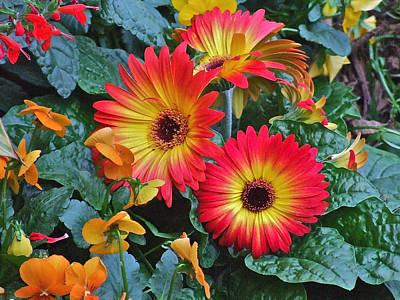 Spring Show 14 Gerbera Daisy 1 Poster