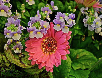 Poster featuring the photograph Spring Show 18 Gerbera Daisy With Snapdragons by Janis Nussbaum Senungetuk