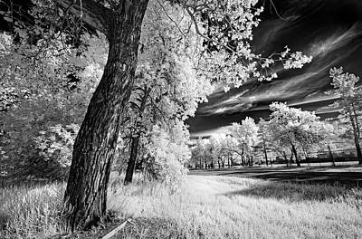 Poster featuring the photograph Spring Sky by Dan Jurak