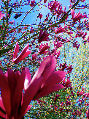 Spring Sky Poster