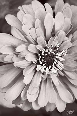 Spring Solitude - Monochrome By Fleblanc Poster by F Leblanc