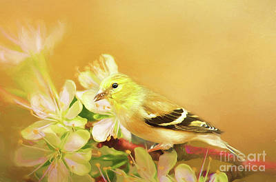 Spring Song Bird Poster by Darren Fisher