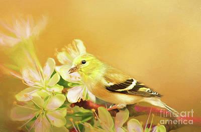 Spring Song Bird Poster