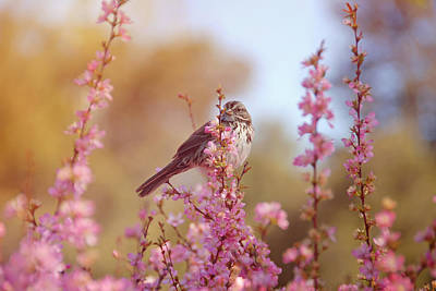 Poster featuring the photograph Spring Sparrow by Lynn Bauer