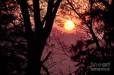 Spring Sunrise Through Trees Poster by Thomas R Fletcher