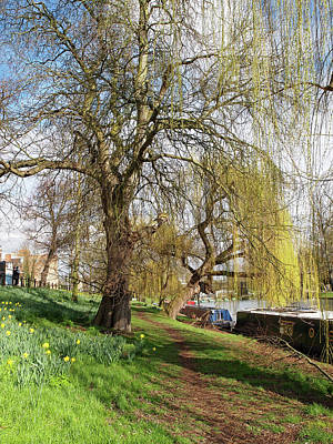 Spring Sunshine On Cambridge Riverbank Poster by Gill Billington
