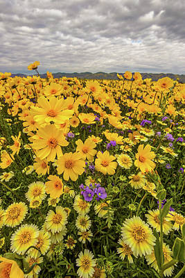Poster featuring the photograph Spring Super Bloom by Peter Tellone