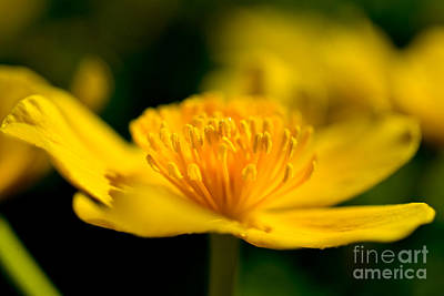 Spring Time Yellow Beauty Poster by Terry Elniski