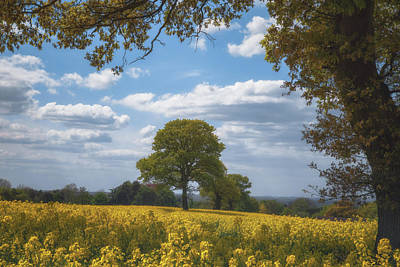 Spring Tree Parade Through The Rapeseed Field Poster