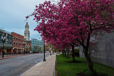 Spring Trees In Boston Fnaueil Hall Poster