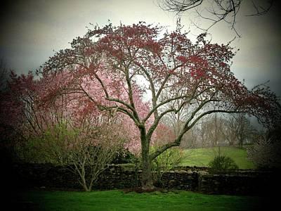 Spring Trees Poster by Joyce Kimble Smith