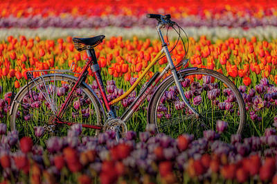 Poster featuring the photograph Spring Tulips And Bicycle by Susan Candelario
