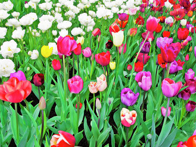Spring Tulips Flower Field I Poster
