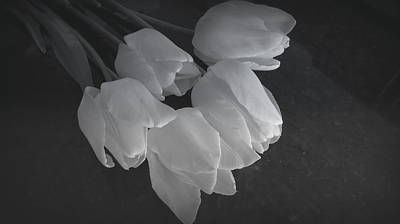 Spring Tulips In Black And White Poster by Kay Novy