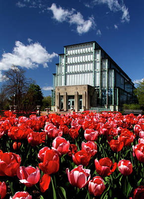 Spring Tulips In Front Of The Jewel Box Forest Park Poster by Garry McMichael
