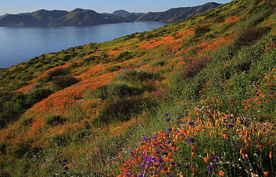 Poster featuring the photograph Spring Wildflower Season At Diamond Lake In California by Jetson Nguyen