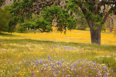 Spring Wildflowers Poster by Carol Leigh