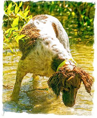 Springer Spaniel Field Poster