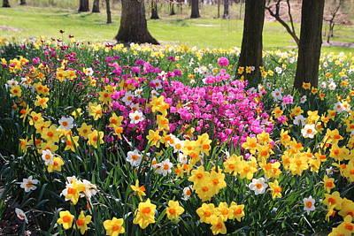 Springtime Blooms Poster
