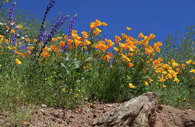 Poster featuring the photograph Springtime In Southern California by Cliff Wassmann