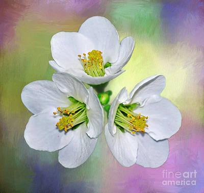 Springtime Triplets By Kaye Menner Poster by Kaye Menner