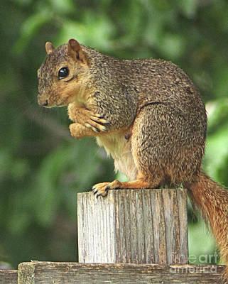 Squirrel Diva - Strike A Pose Poster