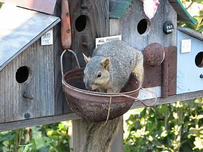 Squirrel Feeding Poster by Patricia Barmatz