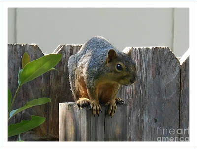 Poster featuring the photograph Squirrel On Post by Felipe Adan Lerma