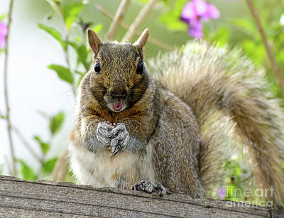 Squirrel Ready To Whistle Poster
