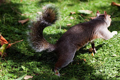 Squirrel Running Poster