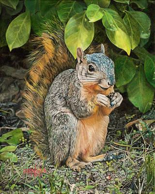 Squirrel Under Bush Poster