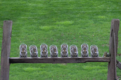 Squirrels Lined Up Poster