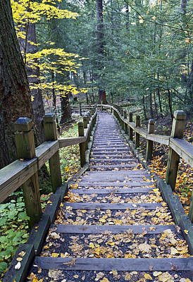 Staircase At Swallow Falls State Park Maryland  Poster