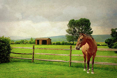 Stallion At Fence Poster by Diana Angstadt