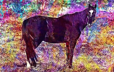 Stallion Horse Brown Pasture  Poster