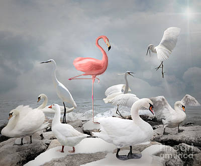 Stand Out From A Crowd - Flamingo And White Birds Poster
