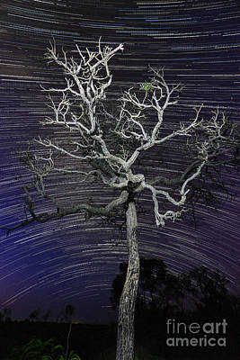 Star Trails In The Cerrado Poster