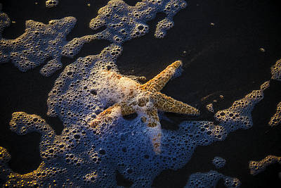 Starfish In Sea Foam Poster