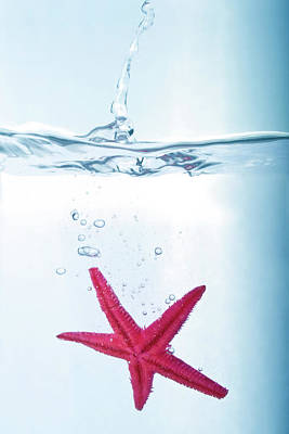 Starfish In Water Poster